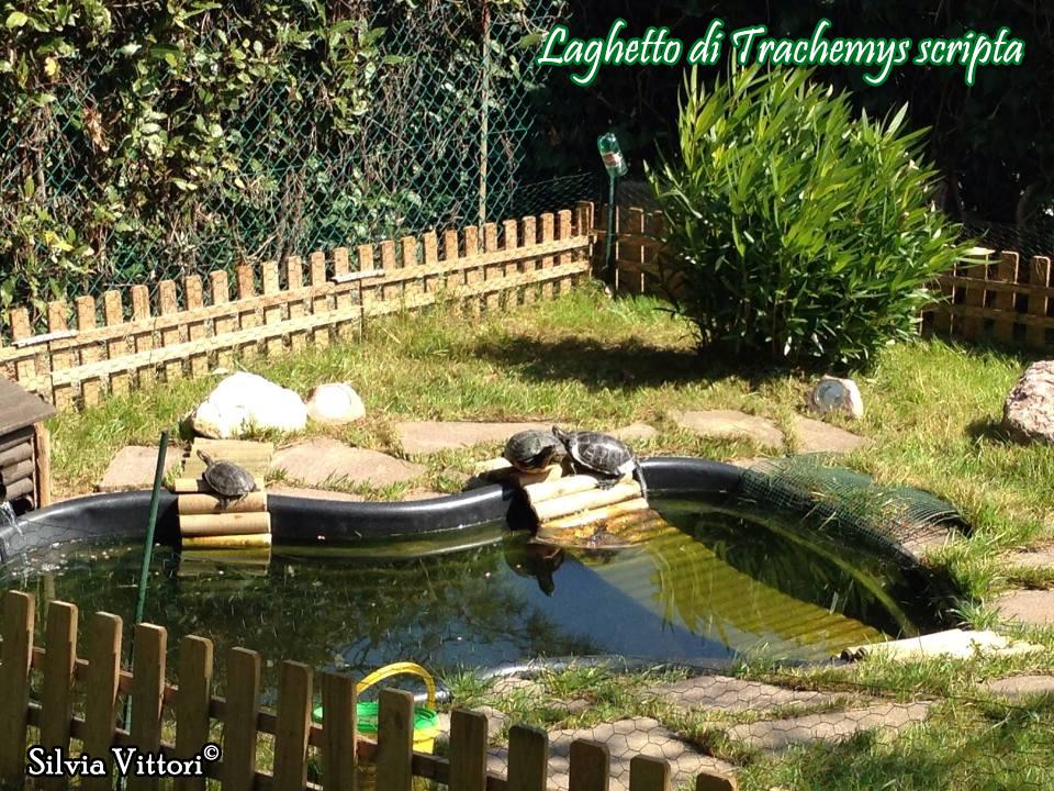 Trachemys scripta scheda riassuntiva tartapedia for Laghetto tartarughe esterno
