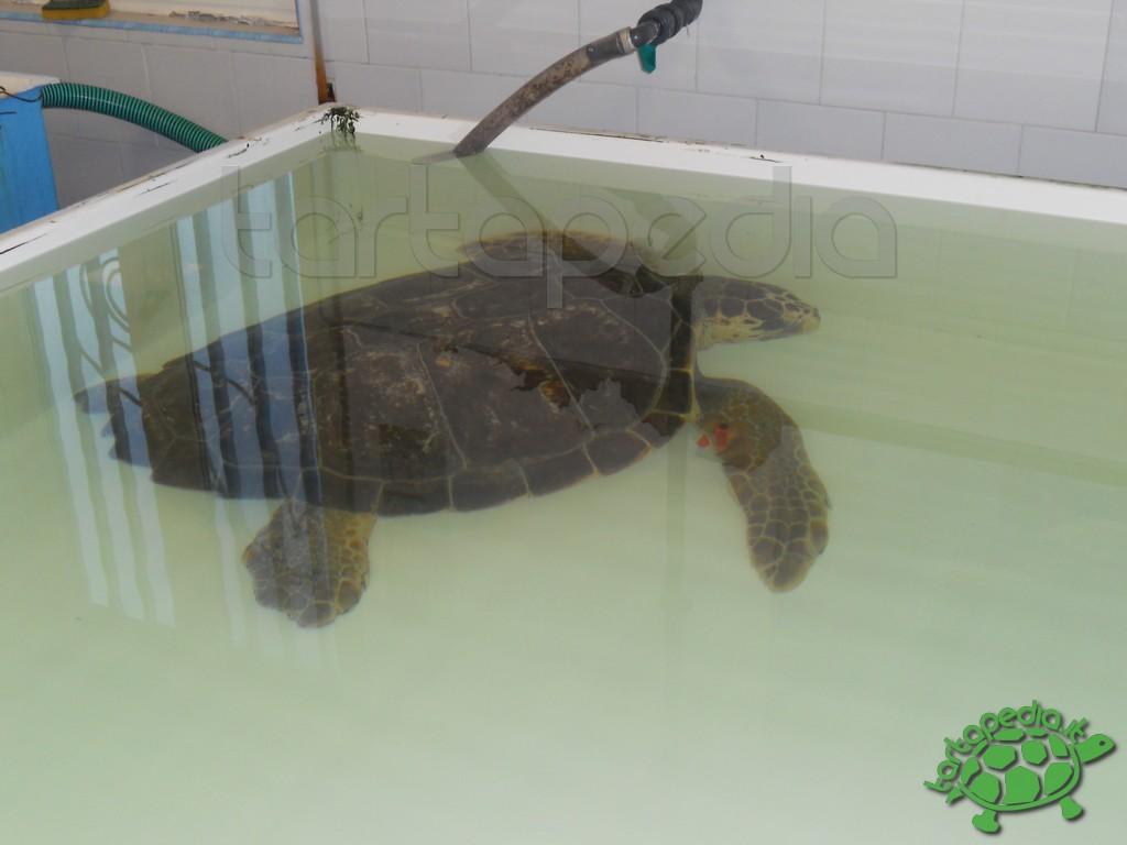 Visita al centro di recupero turtle point di bagnoli (na)