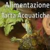 Alimentazione Tartarughe Acquatiche
