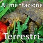 Alimentazione Tartarughe Terrestri
