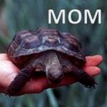Malattia Ossea Metabolica (MOM)