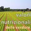 Valori nutrizionali delle verdure e degli ortaggi per Tartarughe Acquatiche