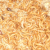 Cibo Vivo – Allevamento Tenebrio Molitor (Tarma della farina)