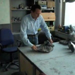 Trovato esemplare di tartaruga di 215 milioni di anni…