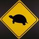 Le tartarughe sulle strade italiane…