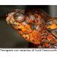 """Il """"ranavirus"""" sta ammazzando decine di tartarughe"""