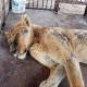LO STERMINIO DEGLI ANIMALI NELLO ZOO DI COLON, BUENO AIRES