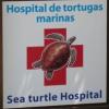 Visita all'ospedale delle tartarughe marine di Majorca (España)
