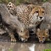 Lasciamo ai Ghepardi il proprio habitat!