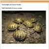 Vendeva online tartarughe senza CITES: denunciato