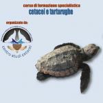 Cetacei e Tartarughe: 3 giorni di seminario svoltisi a Roseto