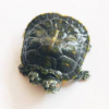 CURIOSITA': Tartaruga a due teste nata in Cina