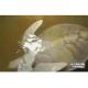 Morta una tartaruga marina albina al Dehiwala Zoo