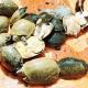 Arrestati contrabbandieri che trasportavano quasi 5000 tartarughe