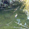 Fermiamo lo scempio delle tartarughe in Villa Floridiana