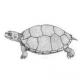 Scoperta una nuova tartaruga: Riodevemys inumbragigas