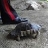 """Tenta di """"rubare"""" una tartaruga alla natura, denunciato"""