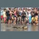 """FOTO – La liberazione della tartaruga """"Eleftheria"""""""