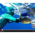 [VIDEO] Tartaruga marina ringrazia il sub che l'ha salvata