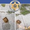 Danno fuoco ad una tartaruga: arrestate due ragazze