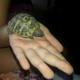La tartaruga prova sentimenti? Matteo Patriarca risponde