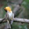 Bracconaggio sardo: sequestrati uccelli soffocati e tartarughe protette