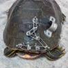 Assurdo a Savona: tartarughe lanciate nel vuoto!