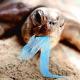 La plastica in mare altera il sesso delle tartarughe marine