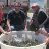 """""""Boomerang"""": La tartaruga affezionata alla laguna di Marceddì"""
