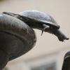 [FOTO] Le tartarughe nei monumenti