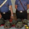 Trenta tartarughe detenute illegalmente: tre denunciati ad Olbia