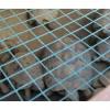Tartarughe e gatti maltrattati. Sequestrati i rettili in prov. di Firenze