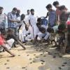 Cento tartarughe marine liberate nel Sud dell'India