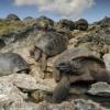 Scoperte tartarughe cavernicole sull'atollo di Aldabra