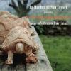 """""""Le 99 tartarughe di Firenze"""" opera di Silvano Porcinai in mostra"""