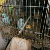 Deteneva animali senza documenti ed in condizioni pietose: denunciato