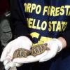 Uomo denunciato nel tarantino: possedeva tartarughe illegalmente
