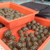 Quasi 150 tartarughe rare sequestrate all'aeroporto di Mumbai
