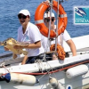 Stamani e domenica 1 Maggio segui le liberazioni della tartarughe marine