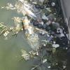 Altre tartarughe recuperate tra i rifiuti del CAOS di Terni