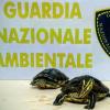 Due tartarughe ritrovate vicino un cassonetto a Cerignola