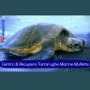Ufficiale: Centro Recupero Tartarughe Marine di Molfetta si sposta a Bisceglie