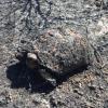 Incendio ad Olbia: salvate 3 tartarughe dalle fiamme