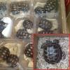 Fermato furgone sull'A26 con oltre 5500 tartarughe a bordo