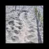 Primo nido di Caretta caretta del 2016 ad Ascea (SA)