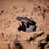 Il nido di Acciaroli (SA) ha portato alla luce 76 tartarughe