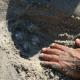 """Tartaruga depone nella Riserva Naturale """"Le Cesine"""""""