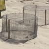 Schiude a Lampedusa il primo nido del 2016