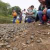 Circa 17.000 baby tartarughe rilasciate in Perù