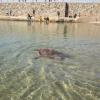 Ritornano in mare tre esemplari di Caretta caretta